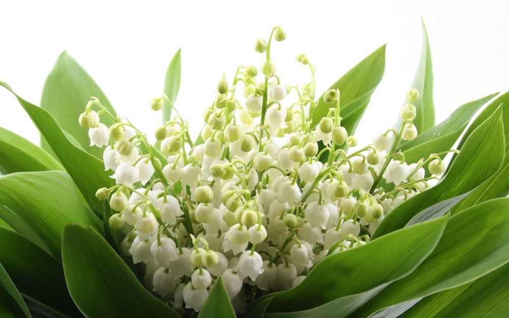 Charming-Lily-of-the-valley-12.jpg