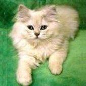 Кот Егорыч