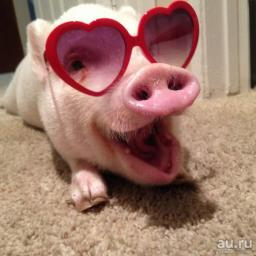 Happy Piggy